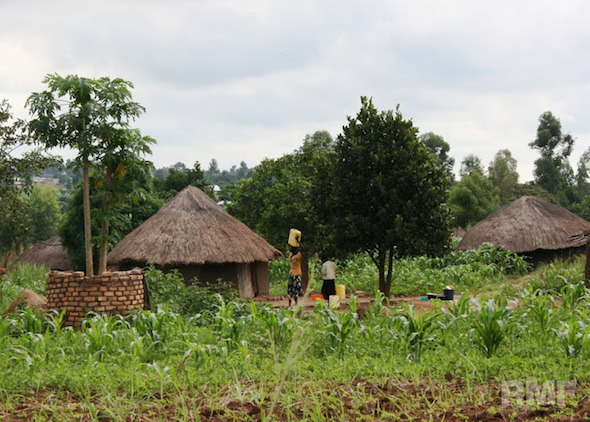 thatched homes in uganda